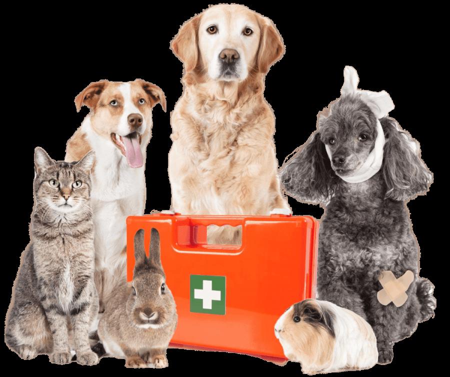 中山動物醫院 友善醫療的最佳選擇 致力於提供尖端的醫療品質